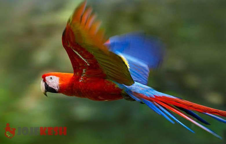 پرنده طوطی و انواع نژاد های آن