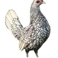 تخم مرغ سبرایت