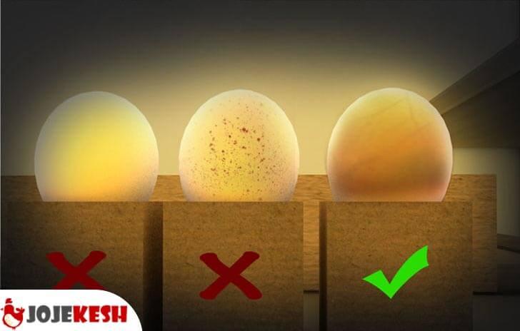 نکات مهم قبل از خرید تخم نطفه دار