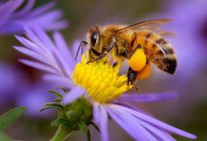 سم زنبور کش بی استپ