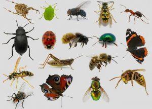 سه سوته از شر حشرات خانگی راحت شو